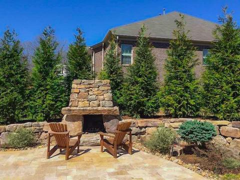 Trees For Privacy - Thuja Green Giant