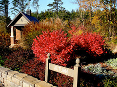 burning bushes in planting bed