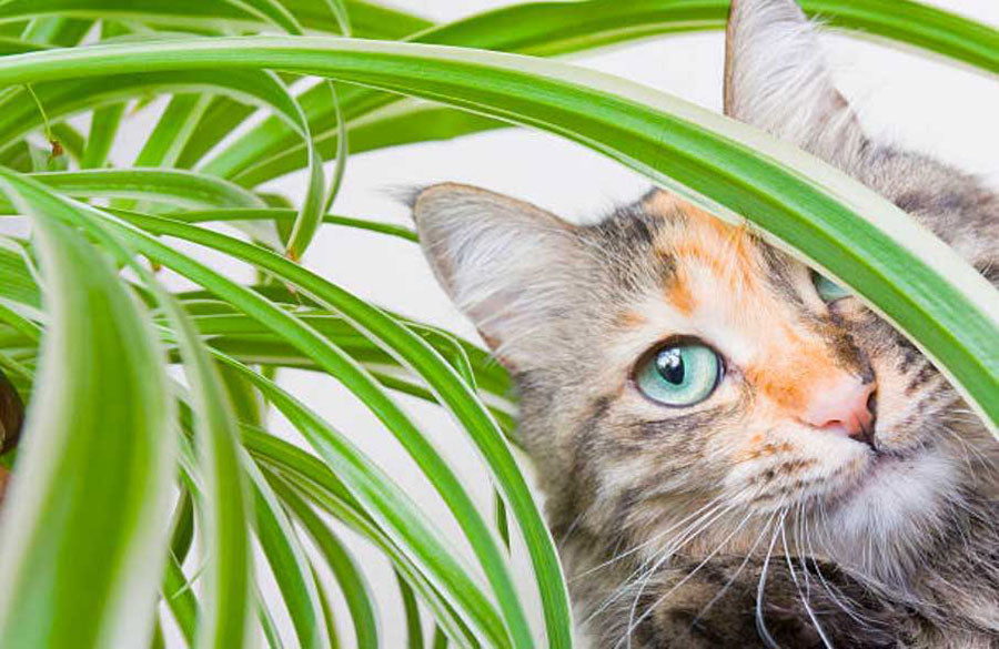 how to keep cats out of house and patio plants?