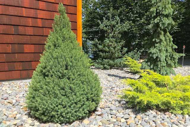 what are the best deer resistant plants?