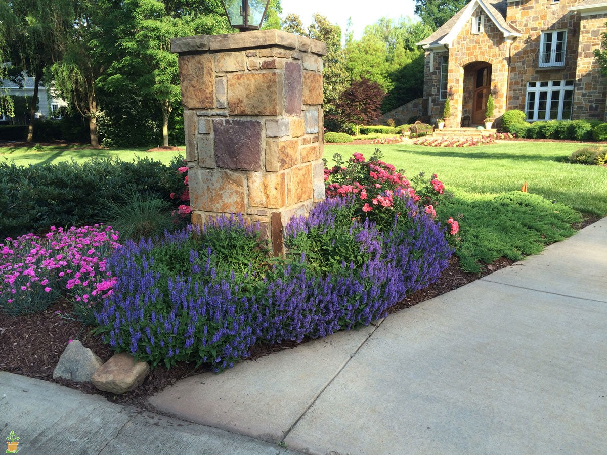 Drift Roses Colors Care And Landscape Ideas