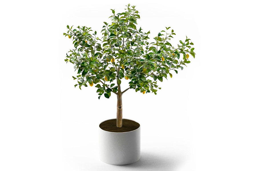 can you grow dwarf trees in pots?