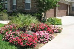 landscaping with drift roses - mixed bed with drift roses