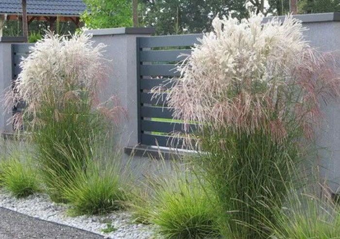 ornamental-grass-img-1