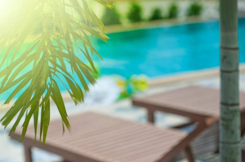palm tree by pool - how to plant palm trees