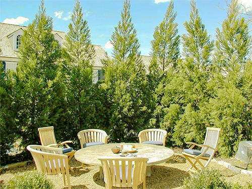 Fast-Growing evergreen trees for zone 6