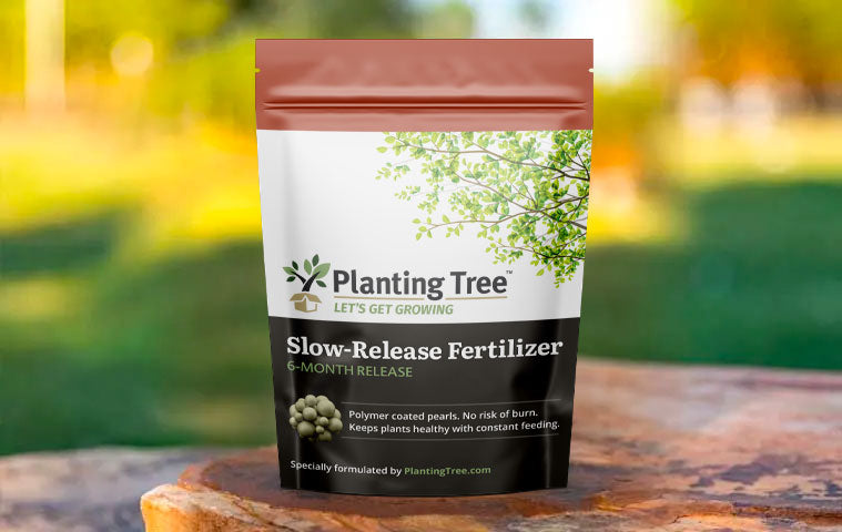 how to fertilize fast growing trees