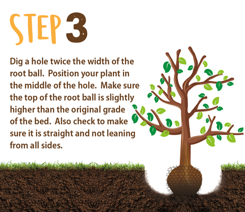 planting directions step 3