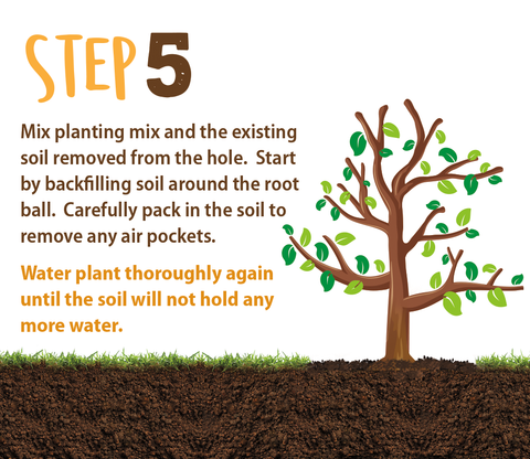planting directions step 5