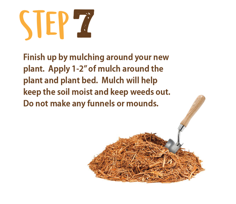 planting directions step 7