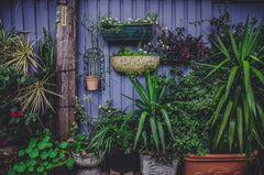 urban garden with a variety of plants
