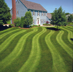 different types of grass for lawns