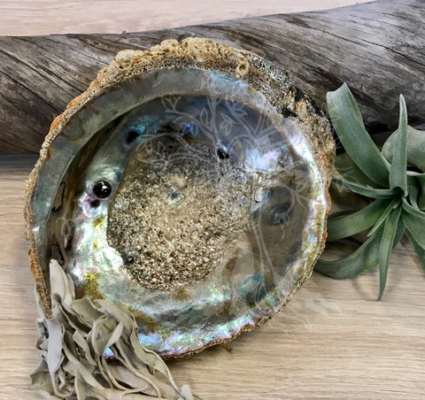 "6"" Abalone Smudging Shell"