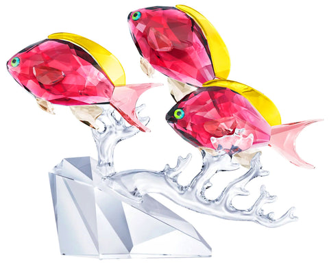 Swarovski Anthias Fish Trio Figurine Crystal Ocean 5 3/8 x 6 7/8 x 1 7/8 inches 5428652