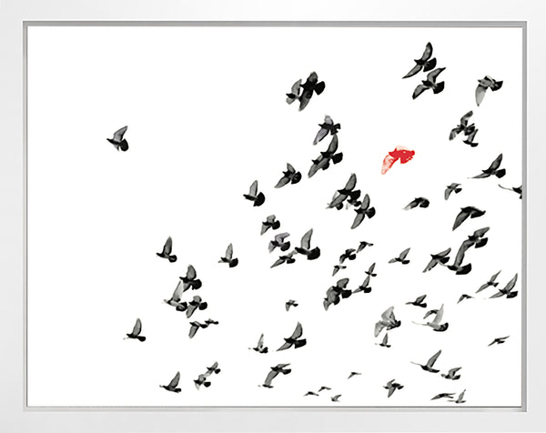 Flock with Red Bird
