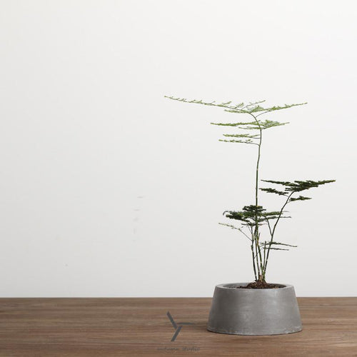 Minimal Desktop Cement Flower Pot, , Clean minimal gifts for designers and creatives, gift, design, designer - Gifts for Designers