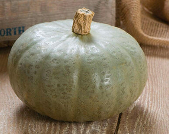 Courge Winter Sweet (1)