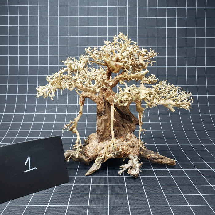 Select Bonsai Tree Wood - 12 inch
