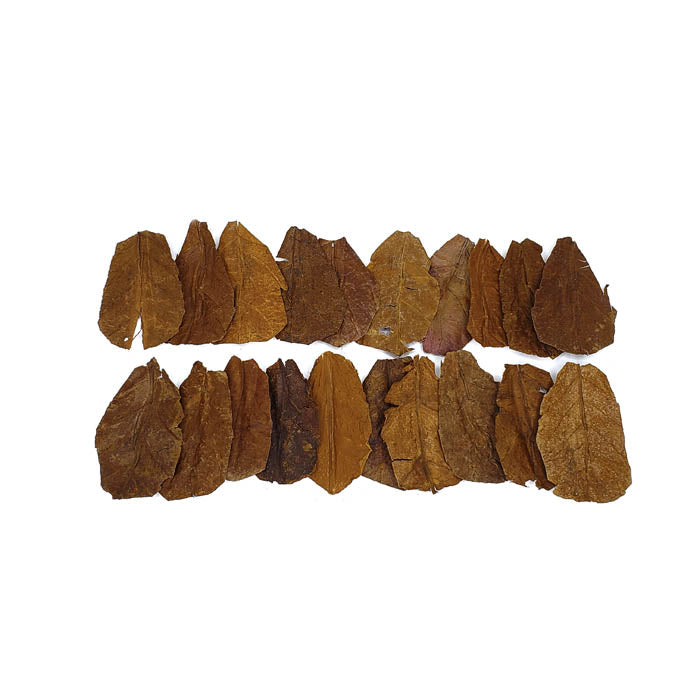Nano Indian Almond Leaves - 20 Pack