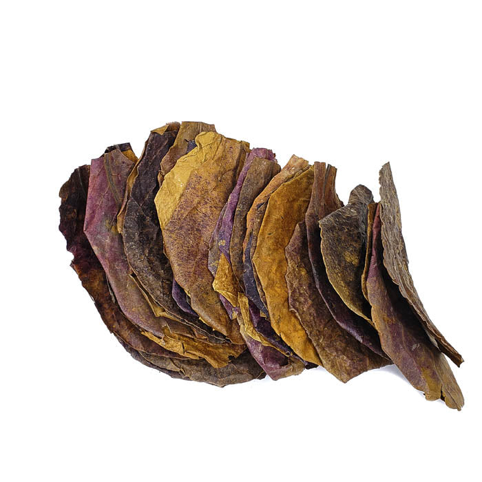 Indian Almond Leaves Large - 40 Pack