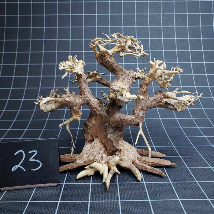 Select Bonsai Tree Wood - 6 inch