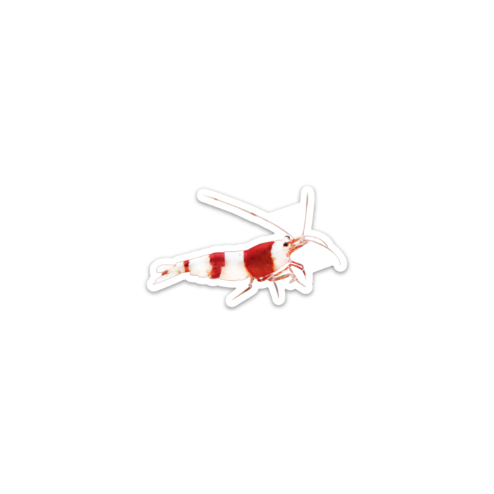 Crystal Red Shrimp Decal Sticker