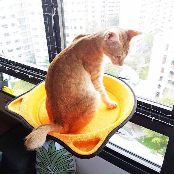 Bright Cat Face Window Hammock (Available in 3 Colours)