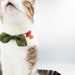 Christmas Leaf Candy Cane Bow Cat Collar