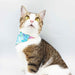 Meow Fairyland Scarf Cat Collar