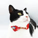 Japanese Daruma Bow Cat Collar (達磨)