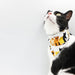 Cat Street Gang Scarf Cat Collar