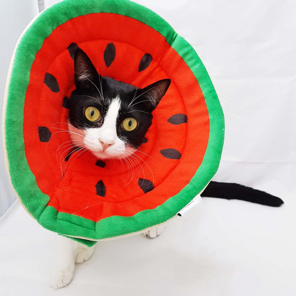 Premium Watermelon E-collar