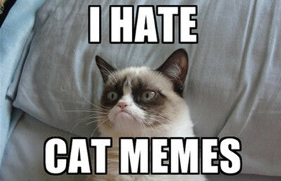 The Best Collection Of Grumpy Cat Memes In The Galaxy