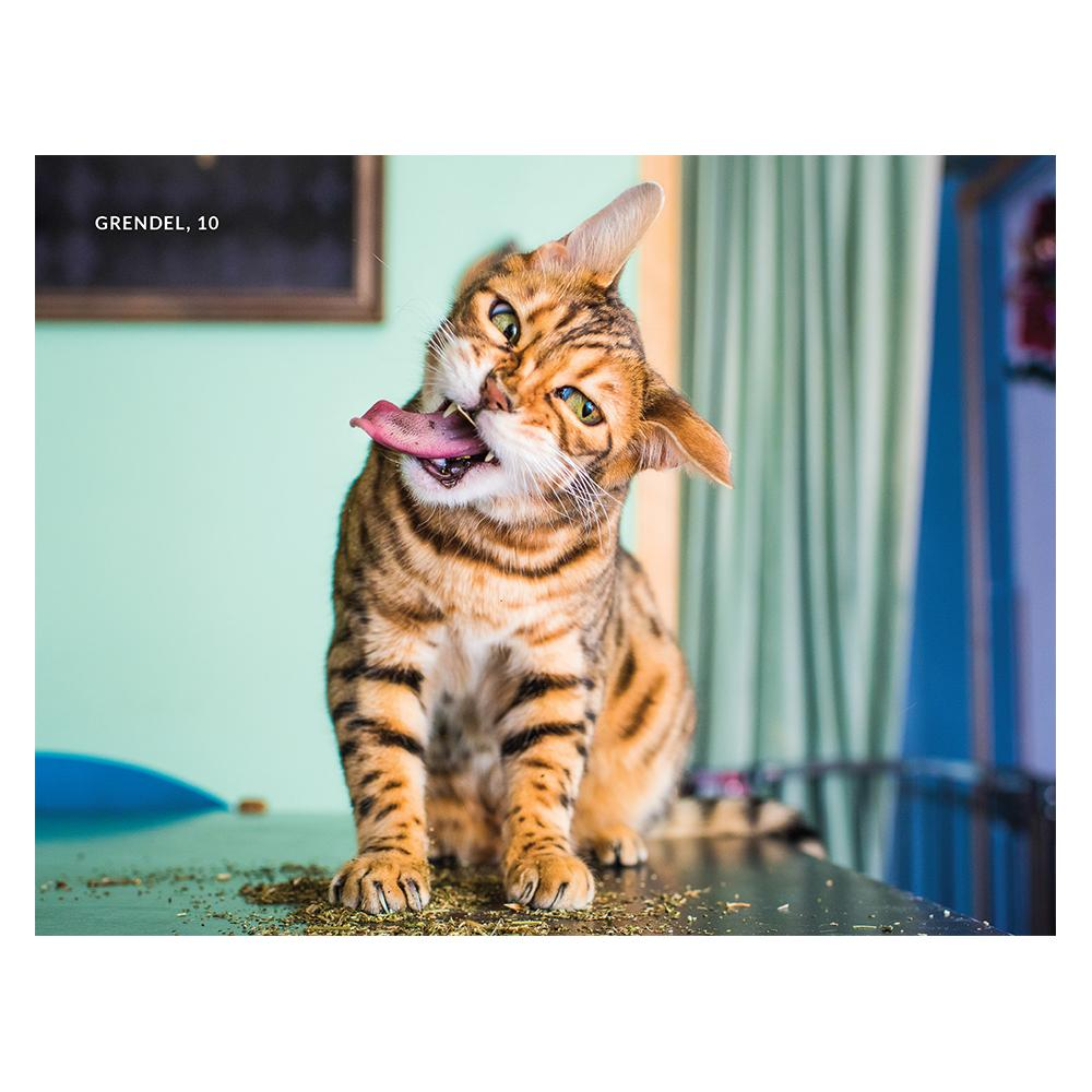 Cats on Catnip Photobook - - Hachette Australia - Yellow Octopus