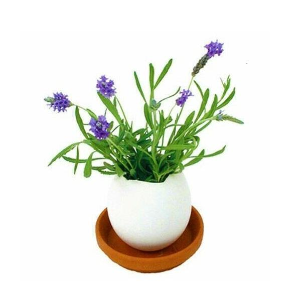 Eggling Crack & Grow Planter Kit with Tray - Lavendar - Eggling - Yellow Octopus