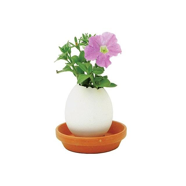 Eggling Crack & Grow Planter Kit with Tray - Petunia Flower - Eggling - Yellow Octopus