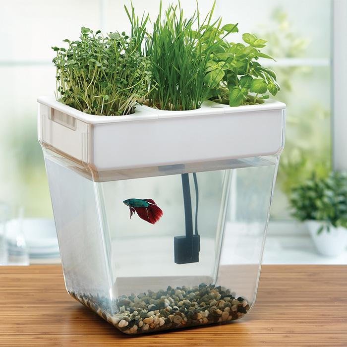 Fluid growers water garden self cleaning fish tank herb for Fish tank herb garden