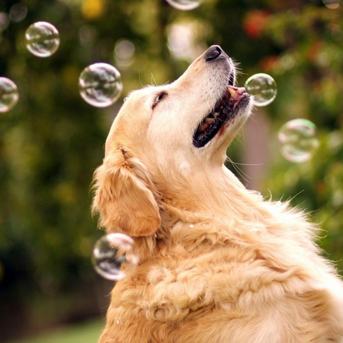 Peanut Butter Flavoured Dog Bubbles - - Huds & Toke - Yellow Octopus