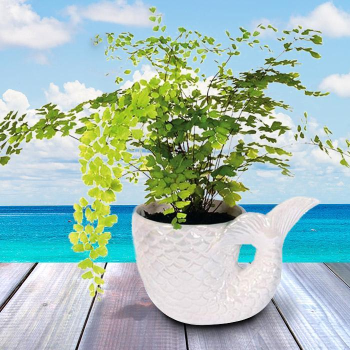 IS Pearlescent Mermaid Tail Plant Pot