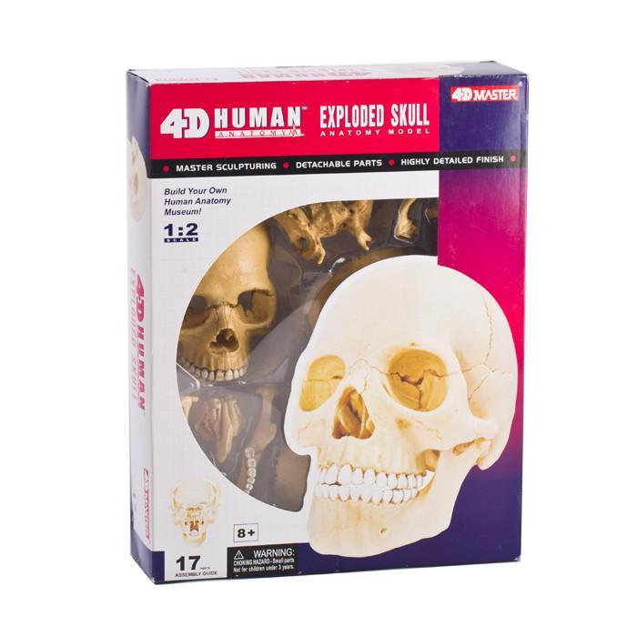 Human Skull Anatomy Model Puzzle - Educational Science 4D Brain ...