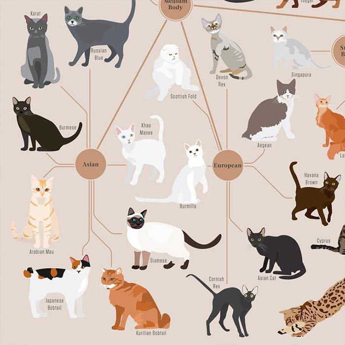 Pop Chart Lab Pop Chart Labs Cats Categorized Poster 61 x 46 cm