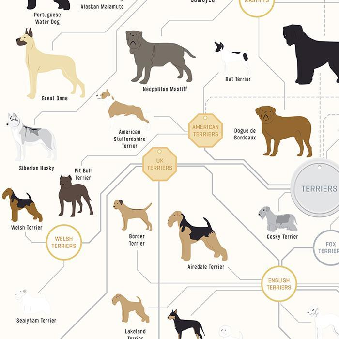 The Diagram Of Dogs Wall Poster 46x16cm | Pop Chart Lab - - Pop Chart Lab - Yellow Octopus
