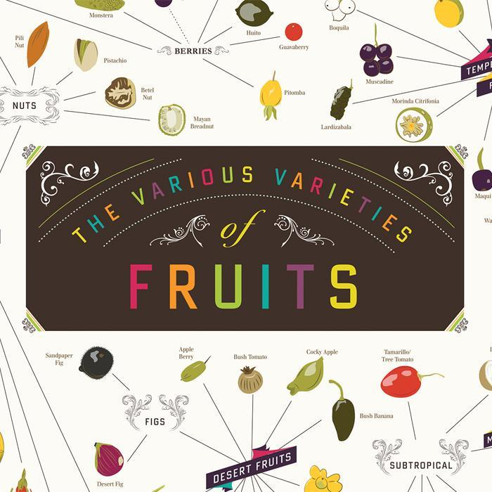 The Various Varieties Of Fruits Poster 99x68cm | Pop Chart Lab - - Pop Chart Lab - Yellow Octopus