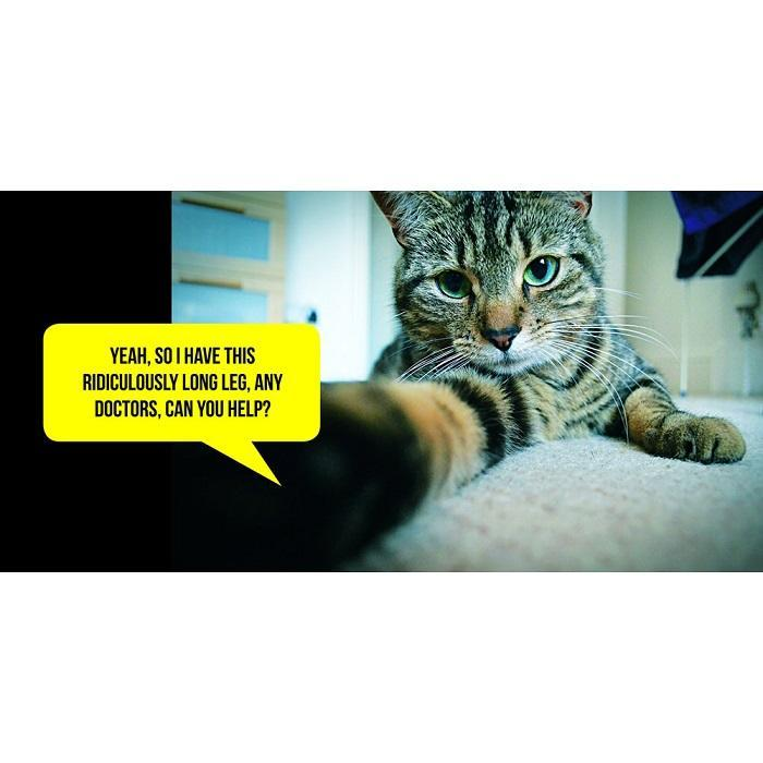 Cat Selfies  Book - - Summersdale - Yellow Octopus