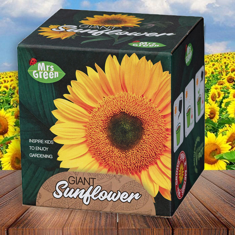 Easter Gifts to Get Delivered | Giant Sunflower Growing Kit | Beanstalk Mums