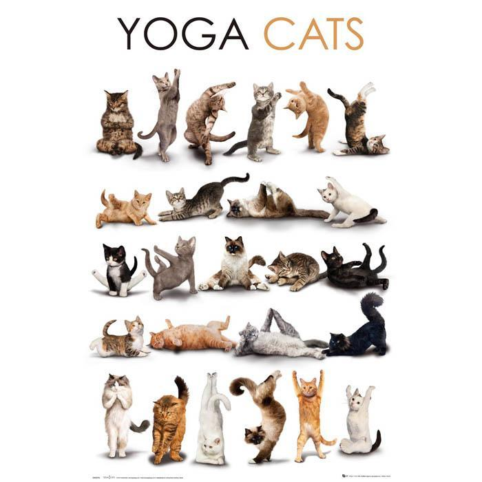 Yellow Octopus Yoga Cats Poster 61 x 91.5cm