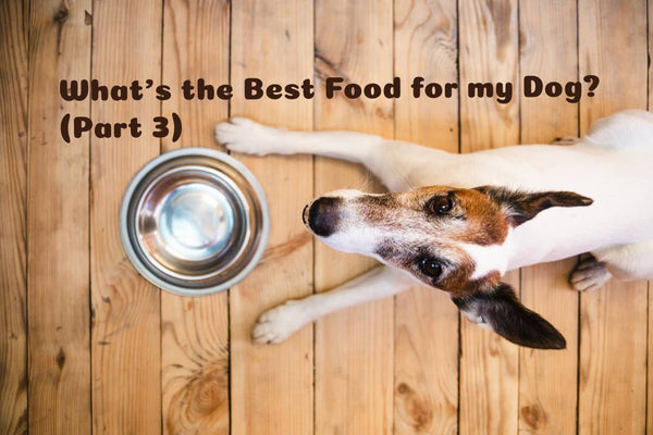 What's The Best Food For My Dog? (Part 3)