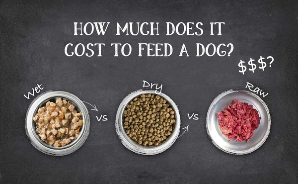 What's The Best Food For My Dog? (Part 2)