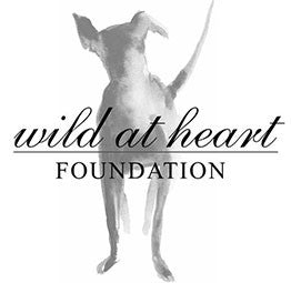 Wild at Heart Foundation: Saving Stray Dogs One Step at a Time