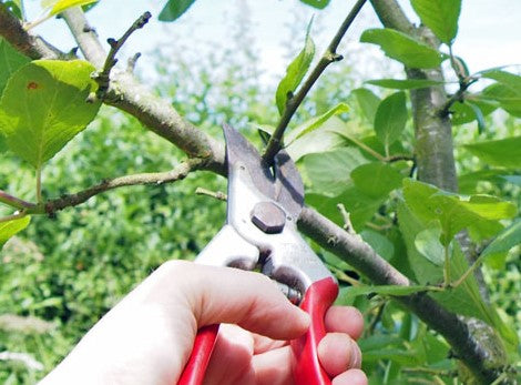 Hot Summertime Pruning